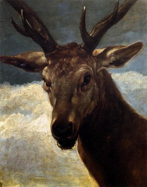 dostojne zwierzę - głowa jelenia