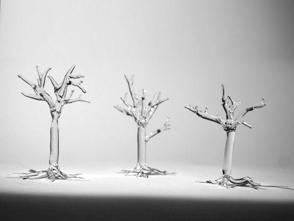 szklane drzewa